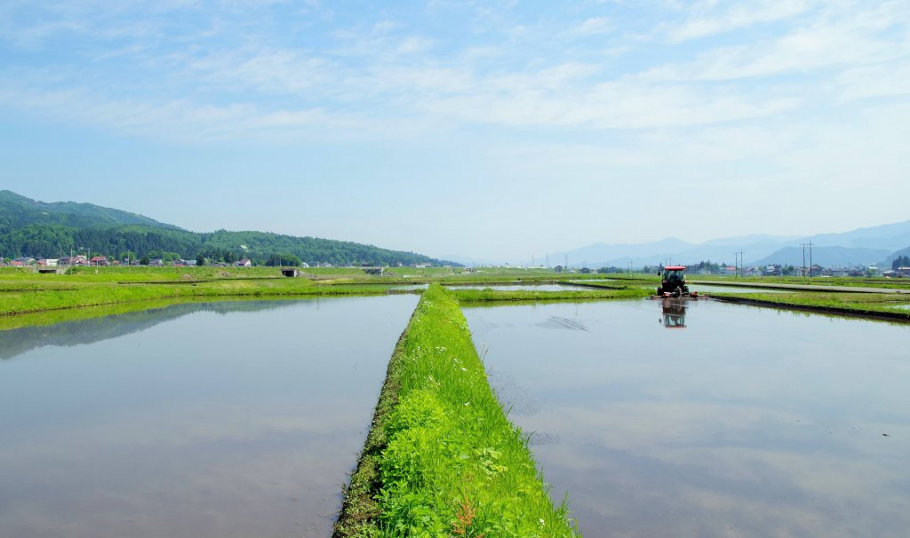 魚沼の田植え