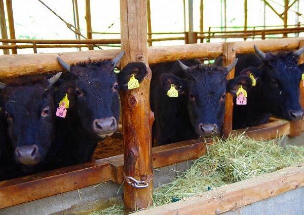 神戸牛の特徴や美味しさの秘密を徹底解説